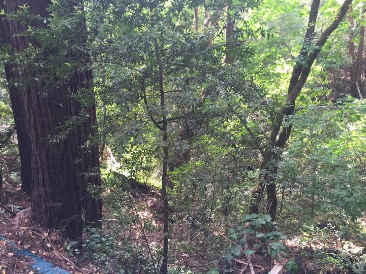 Sylvan Way Felton CA. Photo 2 of 4