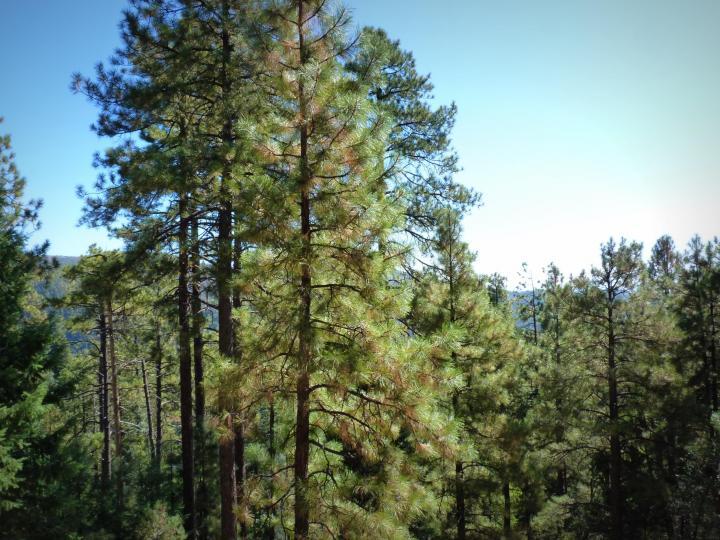 1500 E Forest Service Rd 12488 Prescott AZ Home. Photo 11 of 40