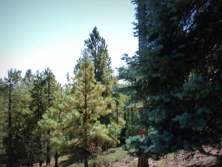 1500 E Forest Service Rd 12488 Prescott AZ Home. Photo 13 of 40