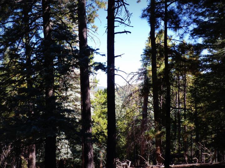 1500 E Forest Service Rd 12488 Prescott AZ Home. Photo 14 of 40