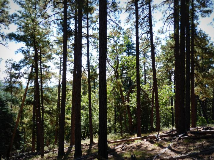 1500 E Forest Service Rd 12488 Prescott AZ Home. Photo 16 of 40
