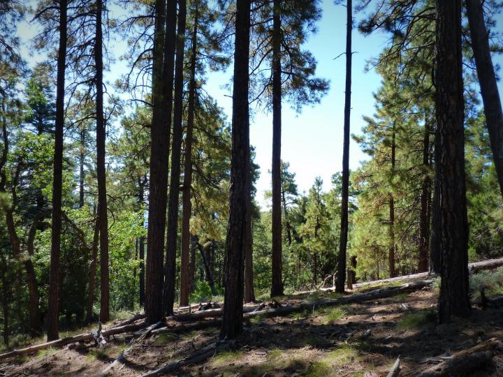 1500 E Forest Service Rd 12488 Prescott AZ Home. Photo 17 of 40