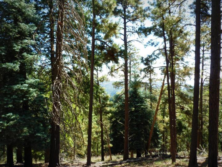 1500 E Forest Service Rd 12488 Prescott AZ Home. Photo 18 of 40