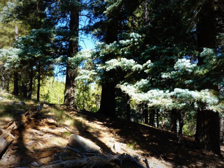 1500 E Forest Service Rd 12488 Prescott AZ Home. Photo 19 of 40