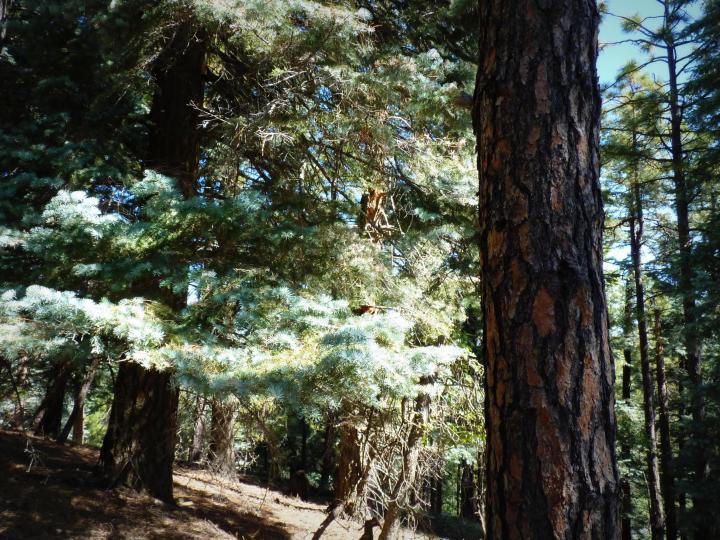 1500 E Forest Service Rd 12488 Prescott AZ Home. Photo 21 of 40