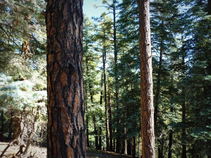1500 E Forest Service Rd 12488 Prescott AZ Home. Photo 22 of 40