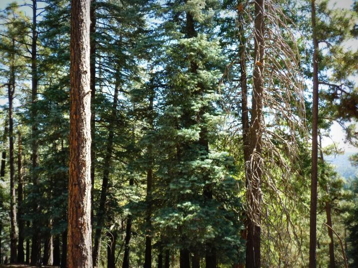 1500 E Forest Service Rd 12488 Prescott AZ Home. Photo 23 of 40