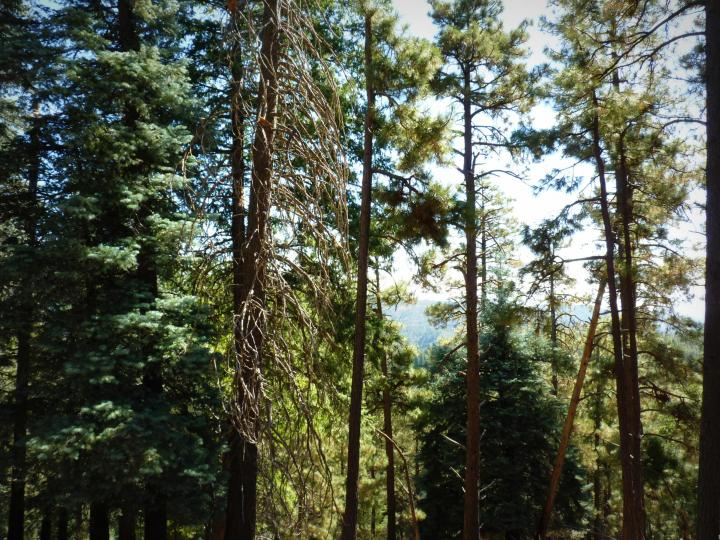 1500 E Forest Service Rd 12488 Prescott AZ Home. Photo 24 of 40