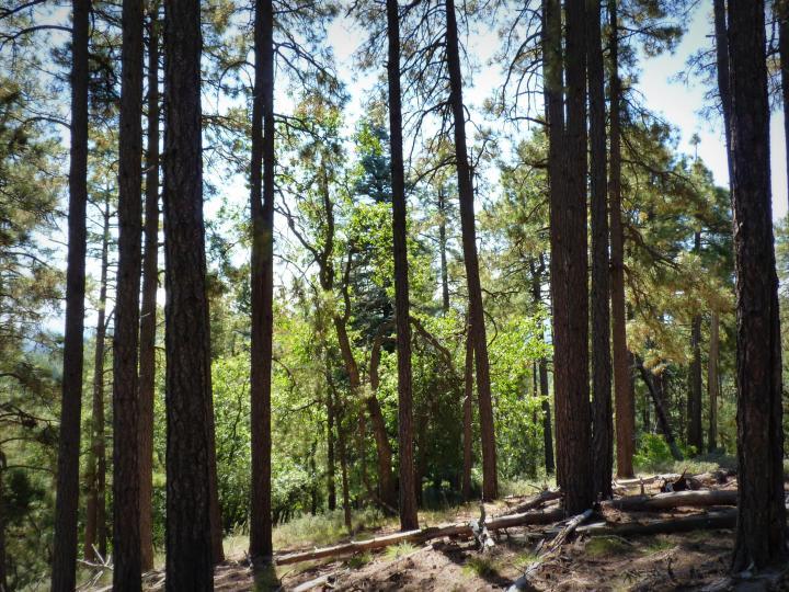 1500 E Forest Service Rd 12488 Prescott AZ Home. Photo 26 of 40