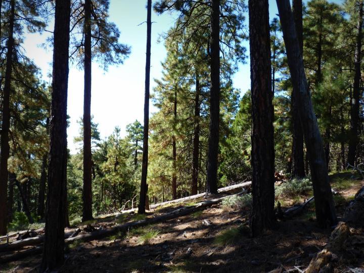 1500 E Forest Service Rd 12488 Prescott AZ Home. Photo 28 of 40