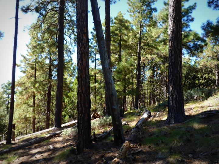 1500 E Forest Service Rd 12488 Prescott AZ Home. Photo 29 of 40