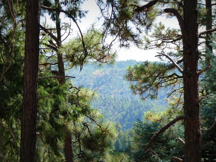 1500 E Forest Service Rd 12488 Prescott AZ Home. Photo 5 of 40