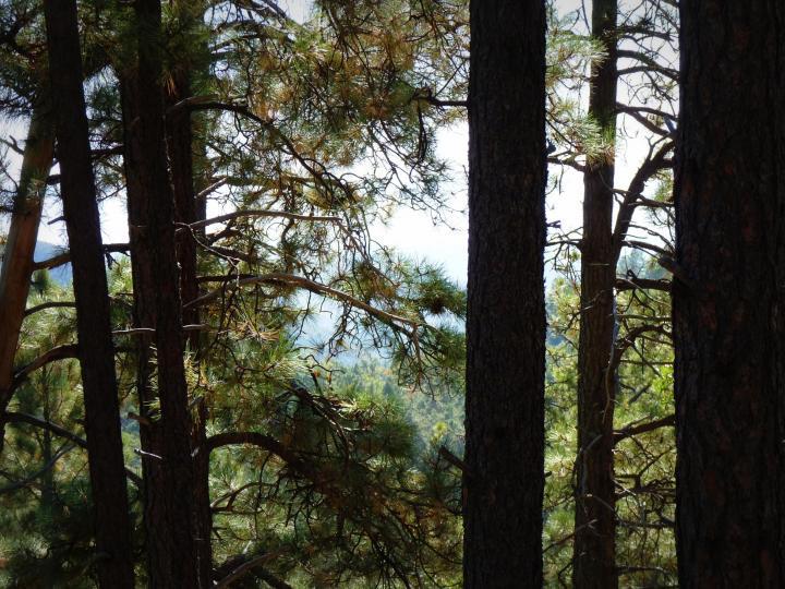 1500 E Forest Service Rd 12488 Prescott AZ Home. Photo 6 of 40