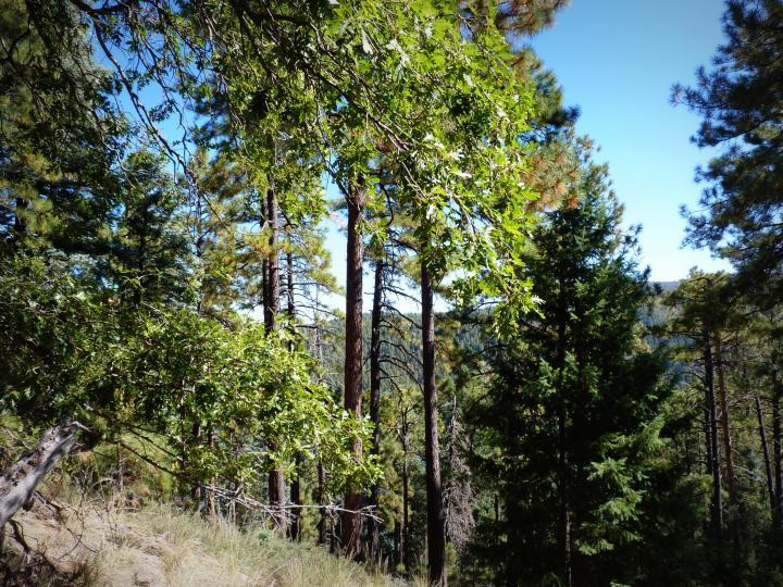 1500 E Forest Service Rd 12488 Prescott AZ Home. Photo 9 of 40