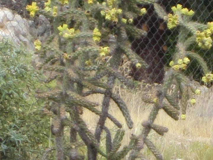 4444 Western Dr Cottonwood AZ Home. Photo 22 of 22