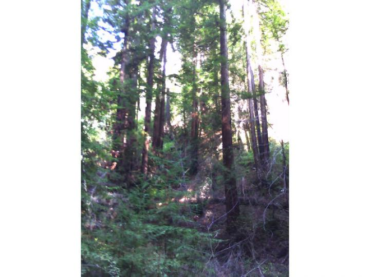 50 Redwood Rd  CA. Photo 3 of 5
