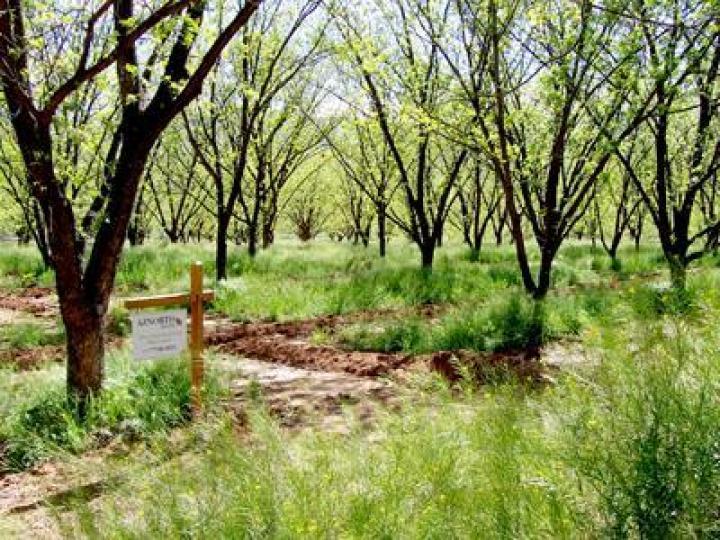 E Quarterhorse Ln Camp Verde AZ. Photo 2 of 2