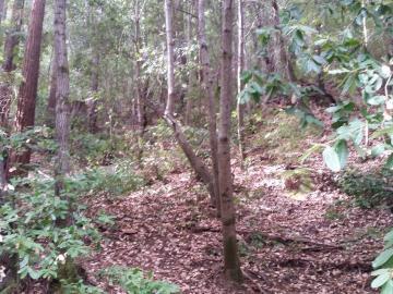 Glen Way Boulder Creek CA. Photo 1 of 3