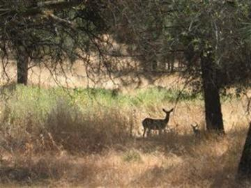 142 Badger Coarsegold CA. Photo 1 of 1