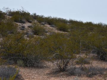 15.4 Acres Equestrian, 5 Acres Or More, AZ