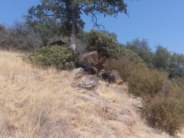 2153 Roan Rd, Angels Camp, CA