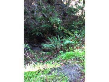 50 Redwood Rd  CA. Photo 5 of 5