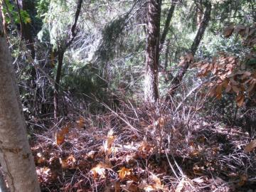 Creekwood San Lorenzo CA. Photo 1 of 1