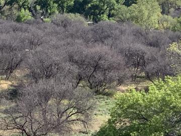 Reay Rd #B, Under 5 Acres, AZ